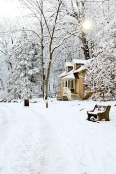 Snowy Cedars House